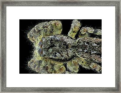 Jumping Spider Framed Print