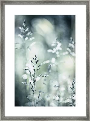June Grass Flowering Framed Print