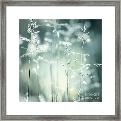 June Green Grass Flowering Framed Print by Elena Elisseeva