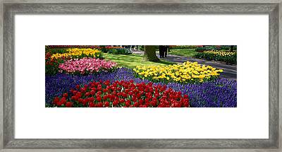 Keukenhof Garden, Lisse, The Netherlands Framed Print