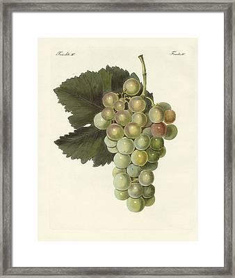 Kinds Of Vines Framed Print
