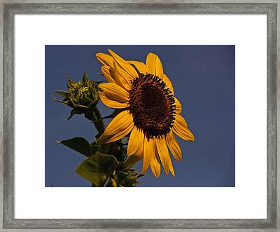 King Of The World Framed Print by John Harding