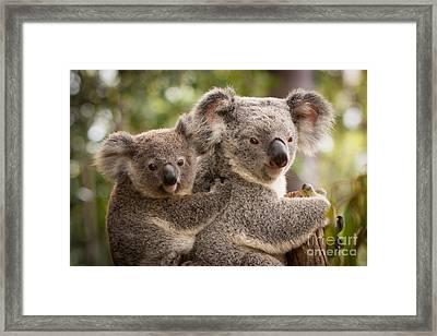 Koala And Joey Framed Print