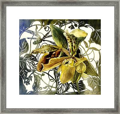 Ladyslipper Orchid Framed Print