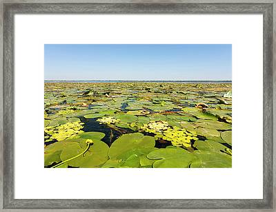 Lake In The Danube Delta, Romania Framed Print by Martin Zwick
