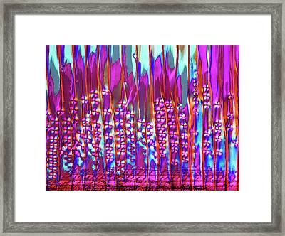 Larch Wood Framed Print