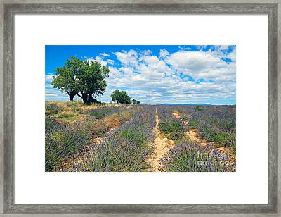 Lavender Field, French Provence Framed Print
