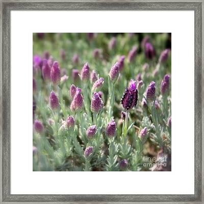 Lavender Standout Framed Print by Carol Groenen