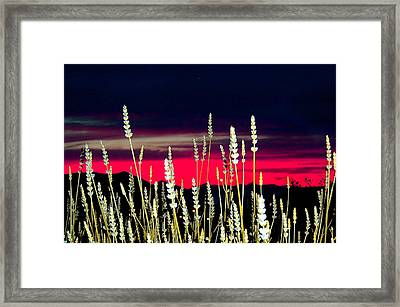 Lavender Sunset Framed Print by Mavis Reid Nugent