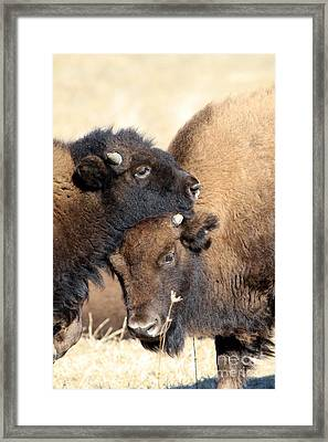 Lean On Me Framed Print by Rick Rauzi