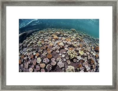 Leather Corals Framed Print by Ethan Daniels