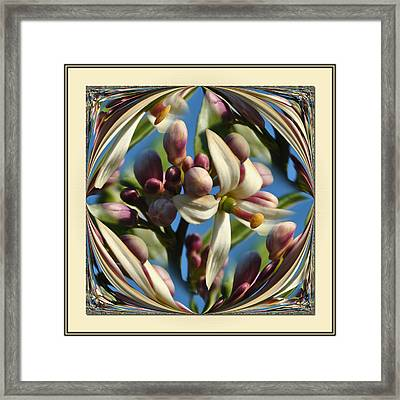 Lemon Tree Flower  Framed Print