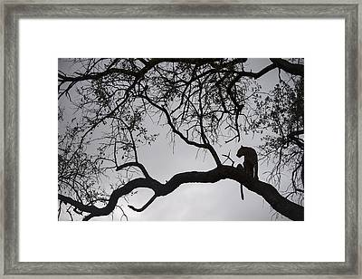 Leopard Sabi-sands Game Reserve South Framed Print by Sergey Gorshkov