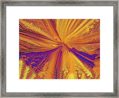 Light Micrograph Of Citric Acid Crystals Framed Print