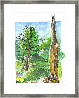 Lightening Strike Tree Framed Print