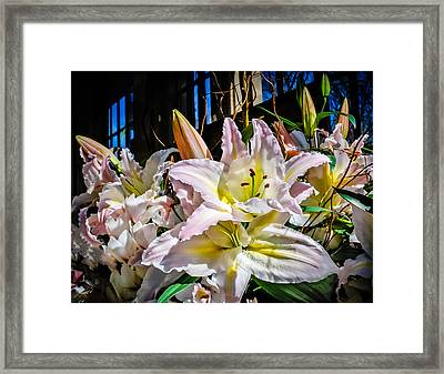 Lilies Out Of The Shadows Framed Print by Len Romanick