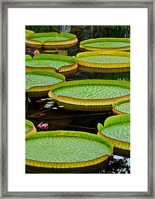 Lilly Pads Framed Print by Frozen in Time Fine Art Photography