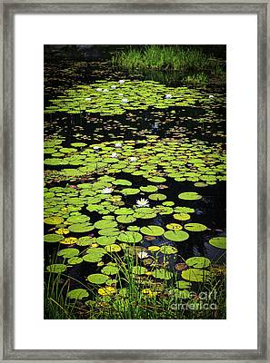 Lily Pads On Dark Water Framed Print