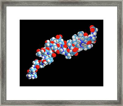 Liraglutide Obesity Drug Molecule Framed Print by Dr Tim Evans