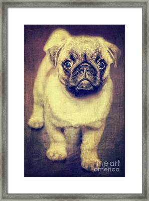 Little Dog Framed Print by Angela Doelling AD DESIGN Photo and PhotoArt