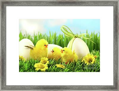 Little Yellow Easter Chicks In The Tall Grass  Framed Print by Sandra Cunningham