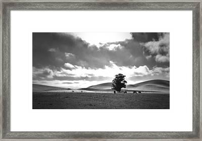 Livermore Ca Framed Print