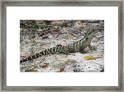 Lizard  Framed Print by Joyce Woodhouse