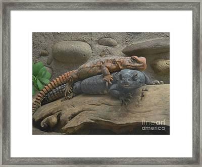 Lizard Love Framed Print by Carla Carson