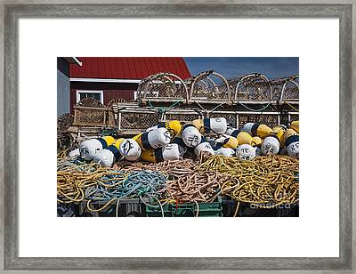 Lobster Fishing Framed Print by Elena Elisseeva