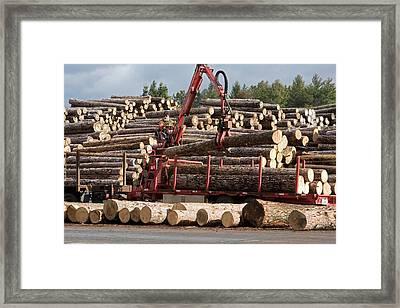 Logs At A Sawmill Framed Print