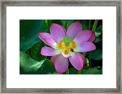 Framed Print featuring the photograph Lotus Flower by Jerry Gammon