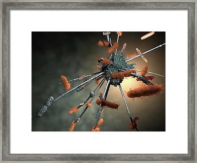 Macrophage Engulfing Bacteria Framed Print