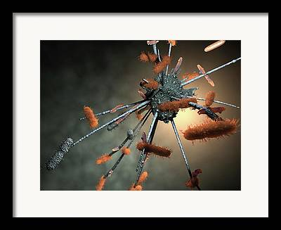Neutrophil Framed Prints