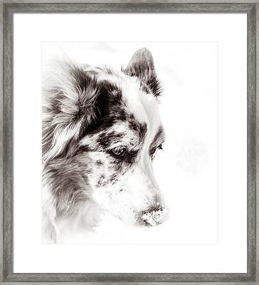 Maggie Framed Print by Cathy Donohoue