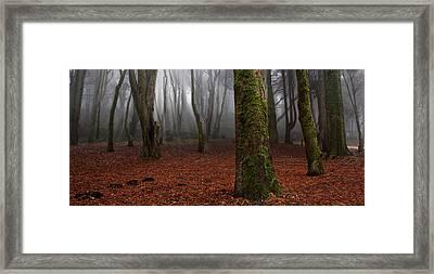Magic Light Framed Print by Jorge Maia