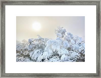 Magic Morning II Framed Print