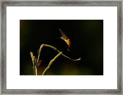 Magical Framed Print by Jeff Swan