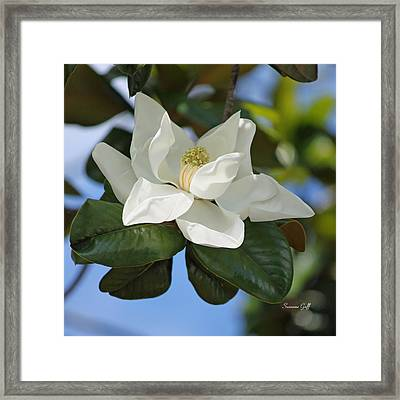 Magnificence Framed Print by Suzanne Gaff