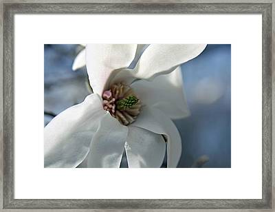 Magnolia In Watercolor Framed Print by Carolyn Stagger Cokley