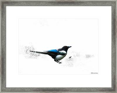 Magpie Framed Print by Jivko Nakev