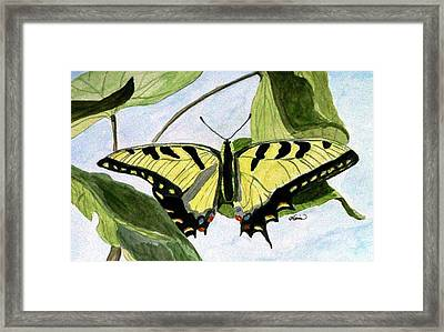 Male Eastern Tiger Swallowtail Framed Print by Angela Davies