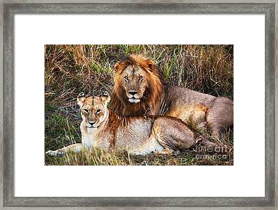 Male Lion And Female Lion. Safari In Serengeti. Tanzania. Africa Framed Print by Michal Bednarek
