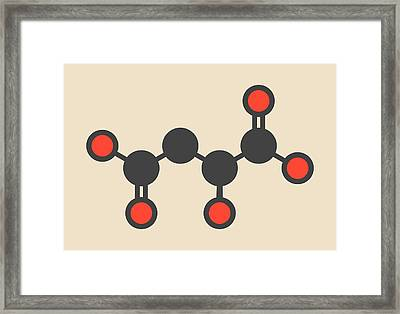 Malic Acid Fruit Acid Molecule Framed Print by Molekuul