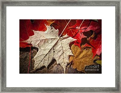 Maple Leaves In Water Framed Print