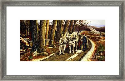 Maple Way Framed Print by Linda Simon