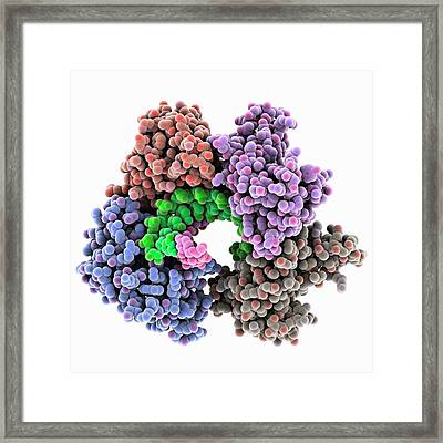 Marburg Viral Protein 35 And Rna Framed Print