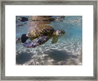Maui Turtle Framed Print