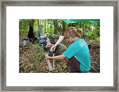 Maya Archaeological Site Framed Print