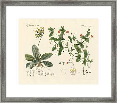 Medical Plants Framed Print by Splendid Art Prints