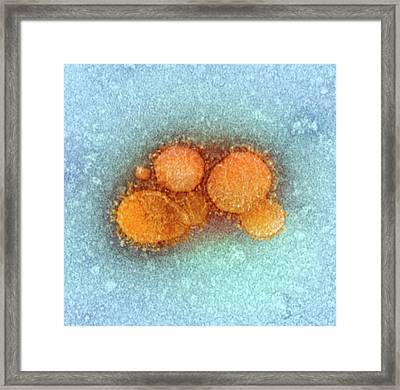 Mers Coronavirus Framed Print by Ami Images